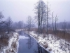Winter, the  border between Poland and Belorus. Bialowieza forest, Poland.